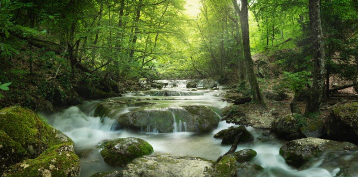 Fastenwandern in der Schlucht am Schwarzwald