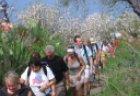 Wanderung durch blühende Mandelhaine auf La Palma