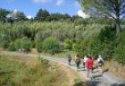 Fastenwandern durch die Olivenhaine der Toskana