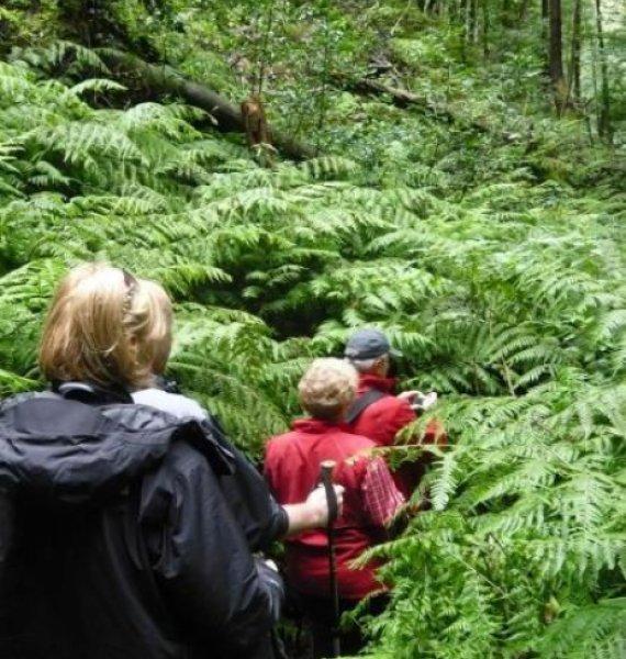 Fastenwander-Gruppe auf La Palma