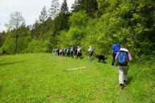 Wanderung zur Ruine Albeck durch Wald- und Naturschutzgebiete