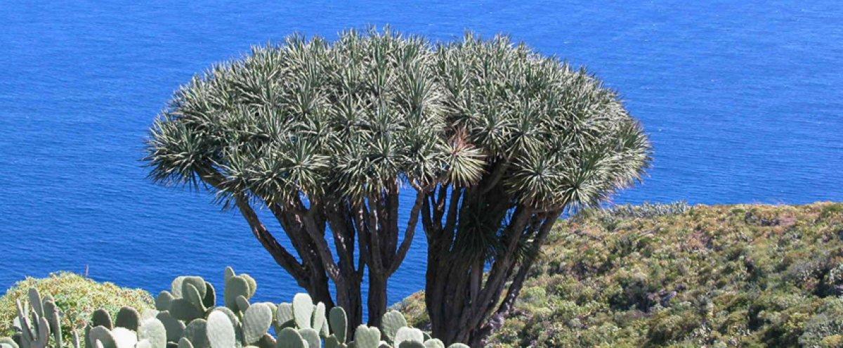 Fasten und wandern auf La Palma