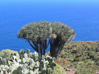 Fastentagebuch auf La Palma
