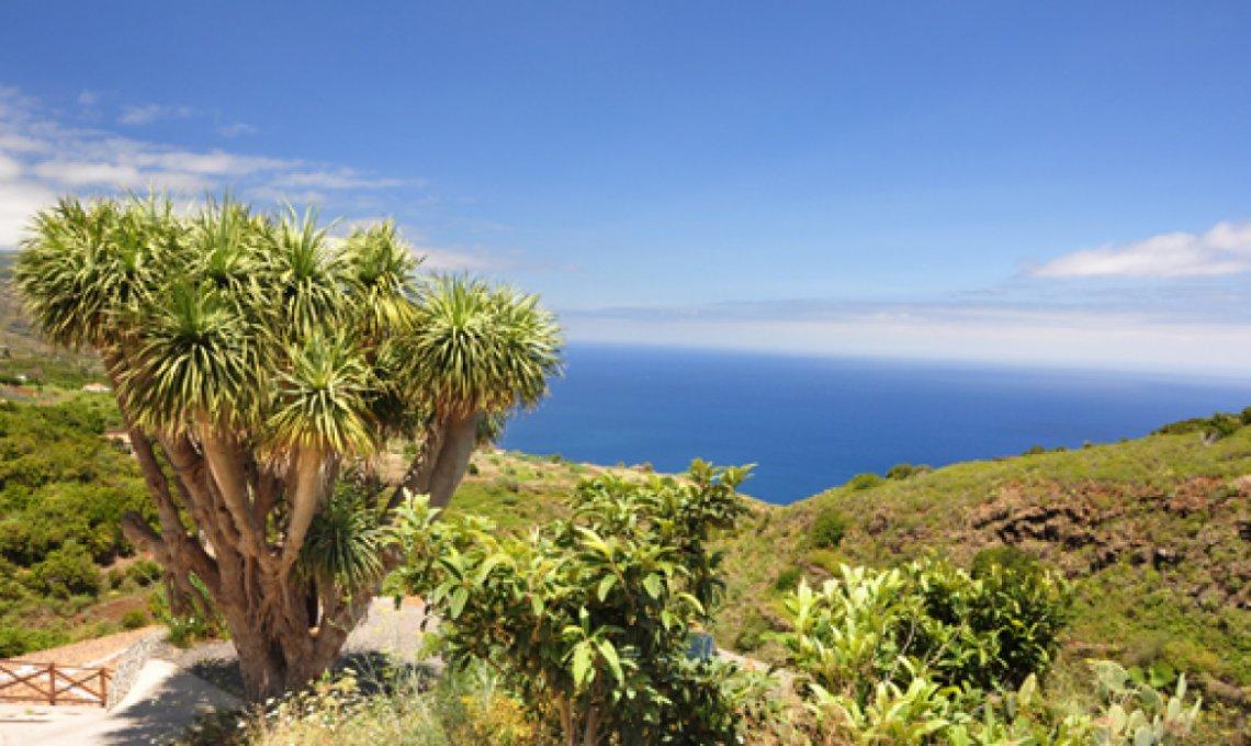 Fastenwandern Kanaren La Palma Drachenbaum
