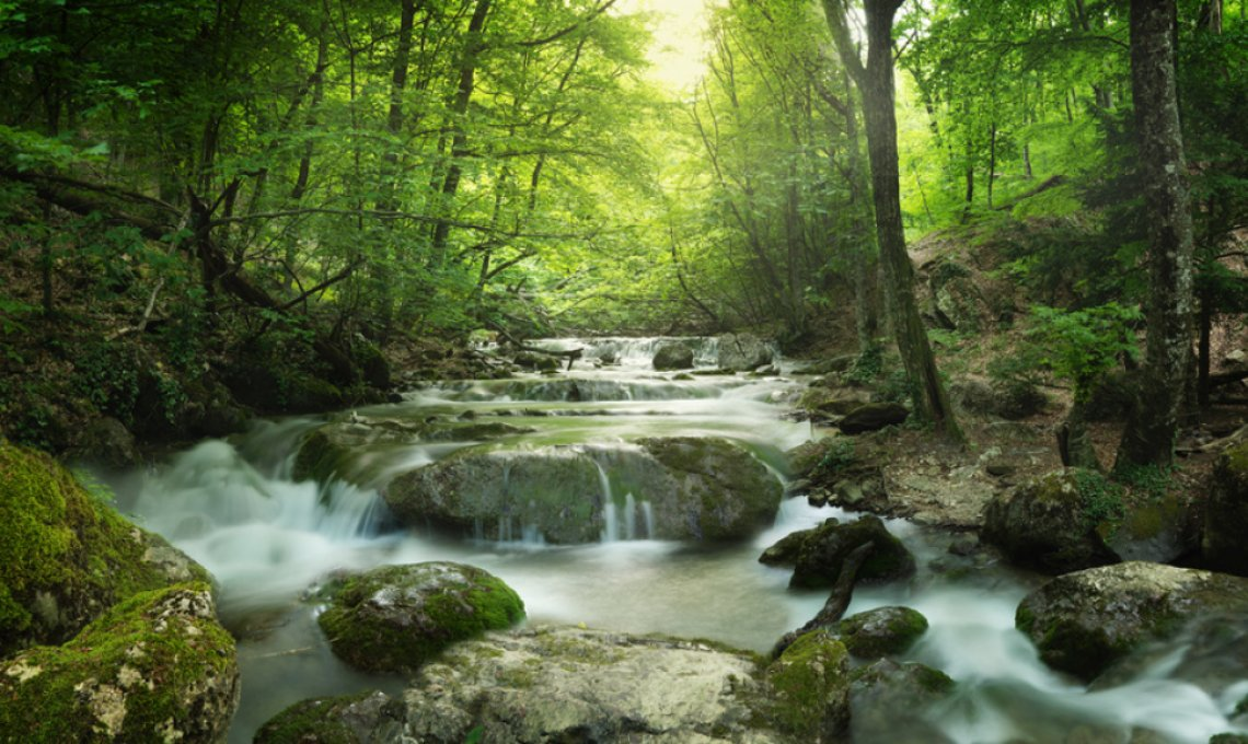 Fastenwandern im Schwarzwald tolle Wanderungen
