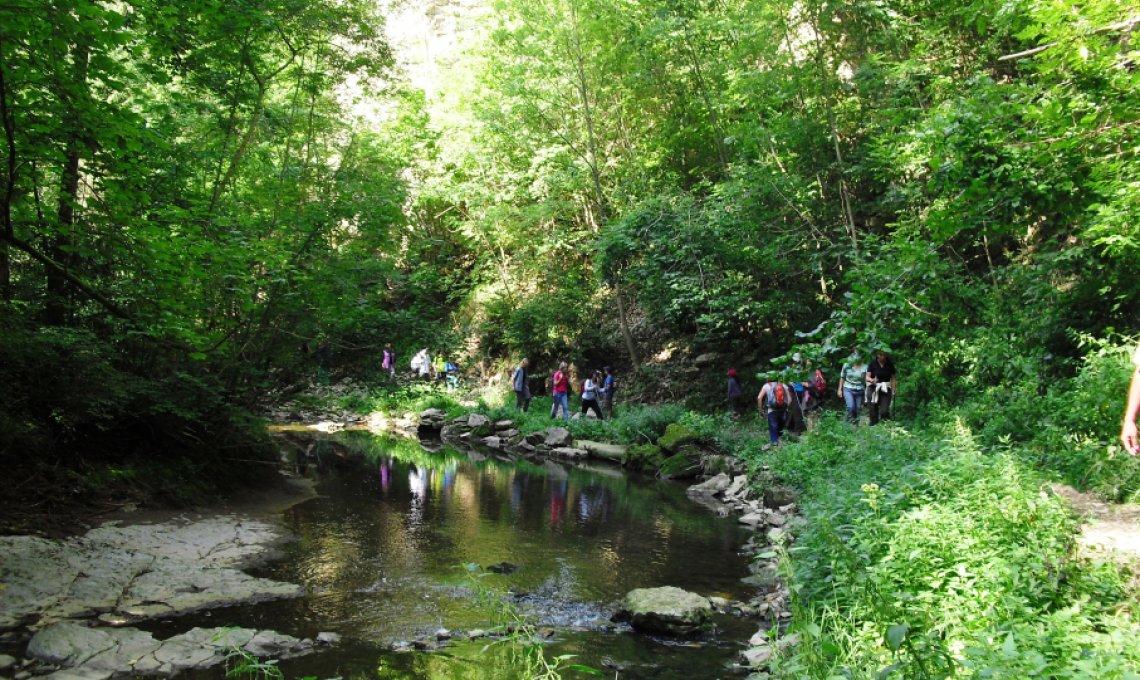 Fastenwandern im Schwarzwald mit tollen Wanderungen