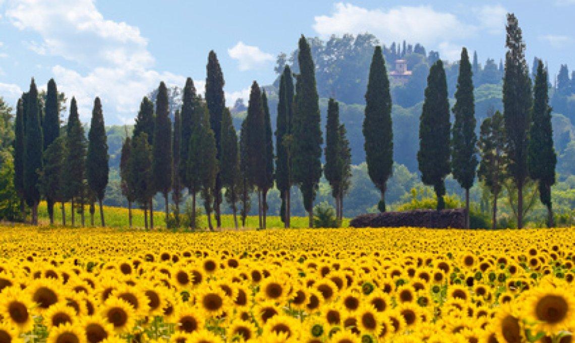 Wunderschöne Hügellandschaft in der Toskana