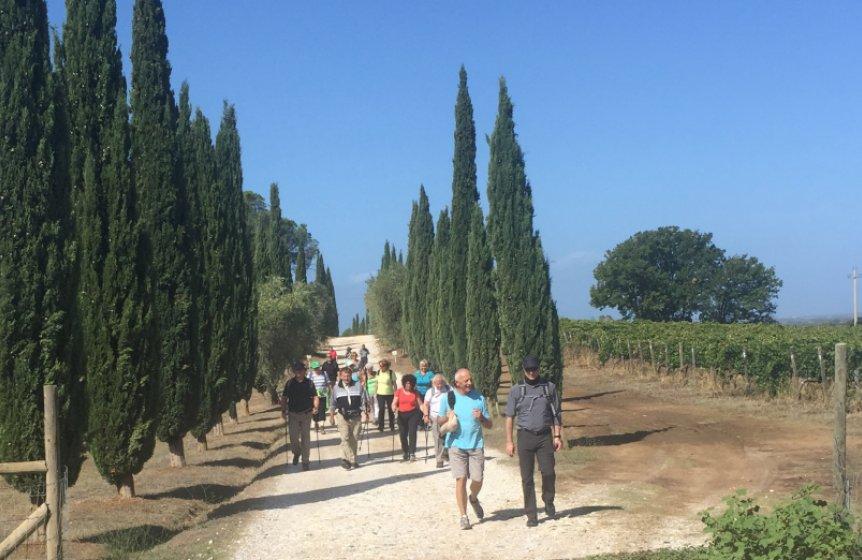 Toskana Wanderung Zypressen & alte Dörfer